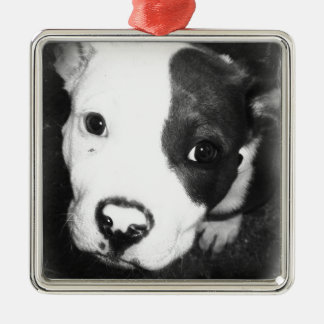 Blue Nose Pitbull Puppy Metal Ornament