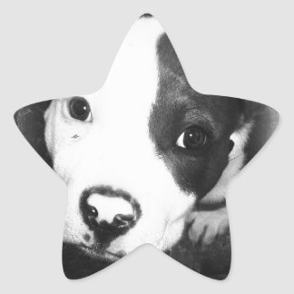 Blue Nose Pitbull Puppy Star Sticker
