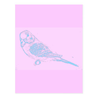 Blue on Pink Budgie Drawing Postcard