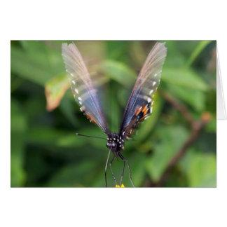 Blue Orange Butterfly In Flight Greeting Cards