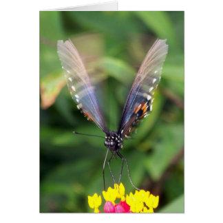 Blue Orange Butterfly In Flight Cards