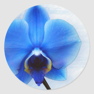 blue orchid exotic flower floral design vintage classic round sticker