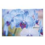 Blue Orchids Photograph