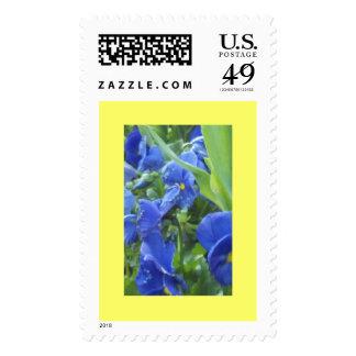 Blue Pansies Postage Stamps