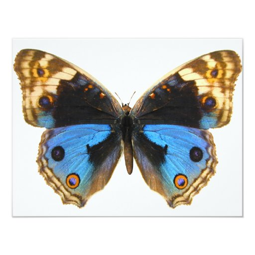 "Blue Pansy Butterfly 4.25"" X 5.5"" Invitation Card"