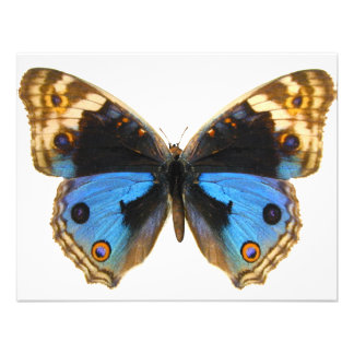 Blue Pansy Butterfly Personalized Invites