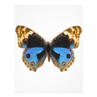 Blue Pansy Butterfly Customized Letterhead