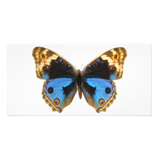 Blue Pansy Butterfly Personalized Photo Card