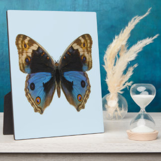 Blue Pansy Butterfly Plaque
