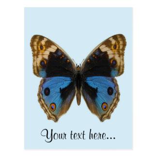 Blue Pansy Butterfly Postcard