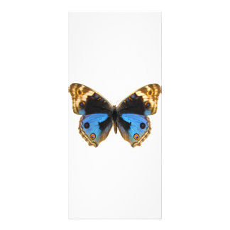 Blue Pansy Butterfly Full Color Rack Card