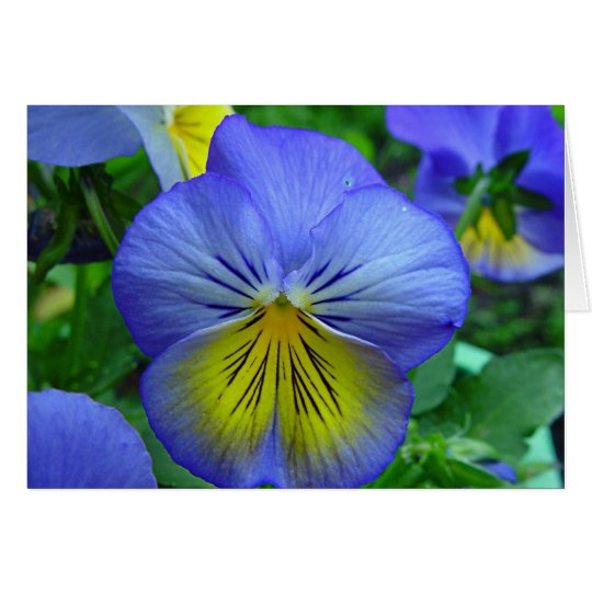 Blue Pansy Card