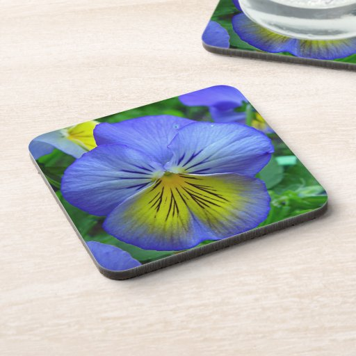 Blue Pansy Coasters