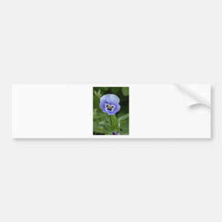Blue Pansy Flower Bumper Stickers