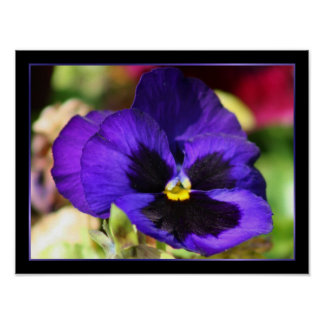 Blue Pansy Flower Poster