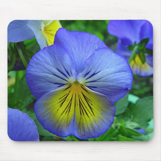 Blue Pansy Mouse Pad