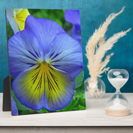 Blue Pansy Photo Plaque