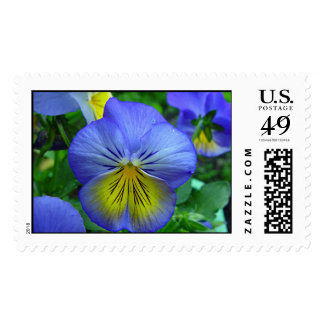 Blue Pansy Postage Stamps