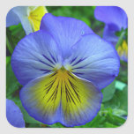 Blue Pansy Sticker
