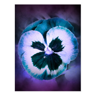 Blue Pansy With Water Droplets Postcard