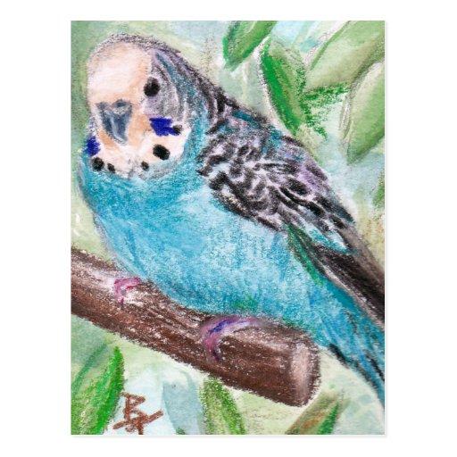 Blue Parakeet Postcard
