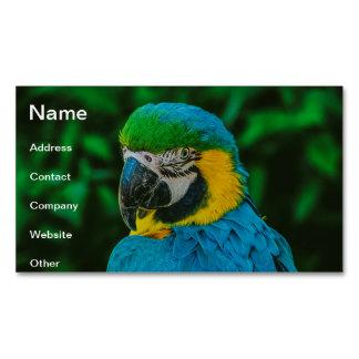 Blue parrot business card magnet