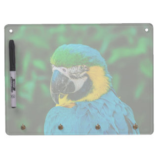 Blue parrot dry erase board with keychain holder