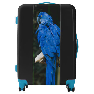 Blue Parrot Luggage