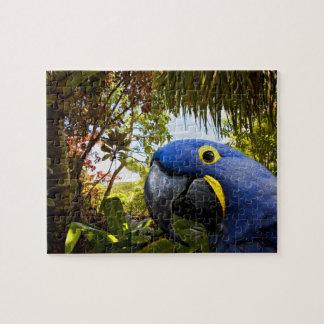 Blue Parrot - Maui Jigsaw Puzzle