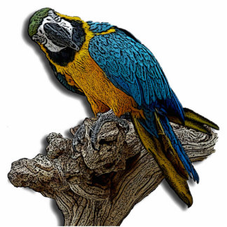 Blue Parrot Photo Sculpture