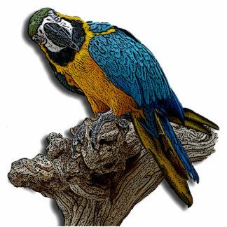 Blue Parrot Photo Sculpture