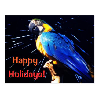 Blue Parrot with Happy Holidays wishes Postcard