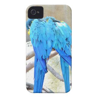 Blue Parrots Phone Case iPhone 4 Covers
