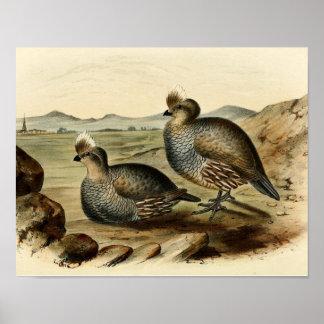 Blue Partridge Poster