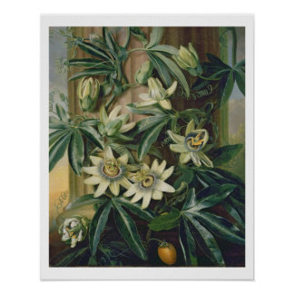 Blue Passion Flower for the 'Temple of Flora' by R Poster