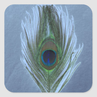 Blue Peacock Feather D Square Sticker
