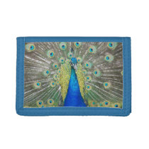 Blue Peacock Feather Plumage Photo Trifold Wallet