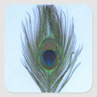 Blue Peacock Feather Square Sticker