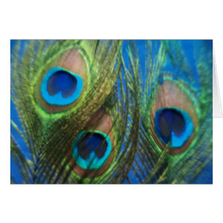 Blue Peacock Feathers Card