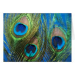 Blue Peacock Feathers Greeting Card