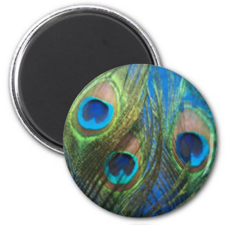 Blue Peacock Feathers Magnet