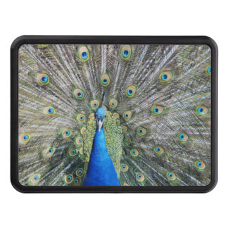 Blue Peacock Full Plumage Hitch Covers