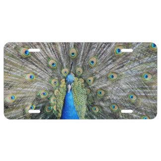 Blue Peacock Full Plumage License Plate