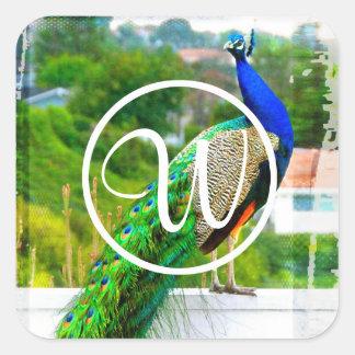 Blue peacock photo custom monogram square sticker