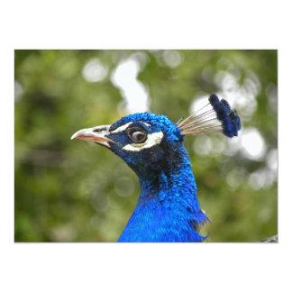 Blue Peacock Portrait invitation