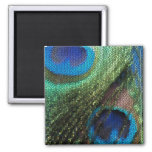 Blue Peacock Stained Glass 2 Inch Square Magnet