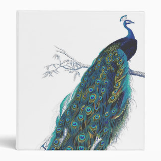 Blue Peacock with beautiful tail feathers Binder