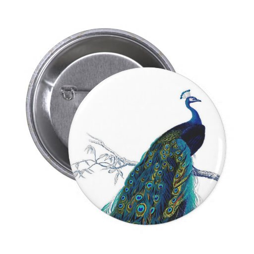 Blue Peacock with beautiful tail feathers Pinback Button