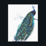 """Blue Peacock with beautiful tail feathers Canvas Print<br><div class=""""desc"""">vintage, peacock, peahen, &quot;pea hen&quot;, blue, turquoise, teal, feathers, bird, birds, animal, animals, wildlife, natural, nature, classic, classy, elegant, sophisticated, art, artistic, drawing, vain, proud, beautiful, pretty, colorful, feather, &quot;dark blue&quot;, wild, peafowl, fowl, green, yellow, girly, feminine, colorful, contemporary, modern, trendy, fashionable, fashion, magnificent, majestic, feminine, white, &quot;royal blue&quot;, royal,...</div>"""