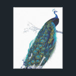 "Blue Peacock with beautiful tail feathers Canvas Print<br><div class=""desc"">vintage, peacock, peahen, &quot;pea hen&quot;, blue, turquoise, teal, feathers, bird, birds, animal, animals, wildlife, natural, nature, classic, classy, elegant, sophisticated, art, artistic, drawing, vain, proud, beautiful, pretty, colorful, feather, &quot;dark blue&quot;, wild, peafowl, fowl, green, yellow, girly, feminine, colorful, contemporary, modern, trendy, fashionable, fashion, magnificent, majestic, feminine, white, &quot;royal blue&quot;, royal,...</div>"